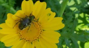 על אביב ופריחה – מקצבים של תנועה ושל שינוי