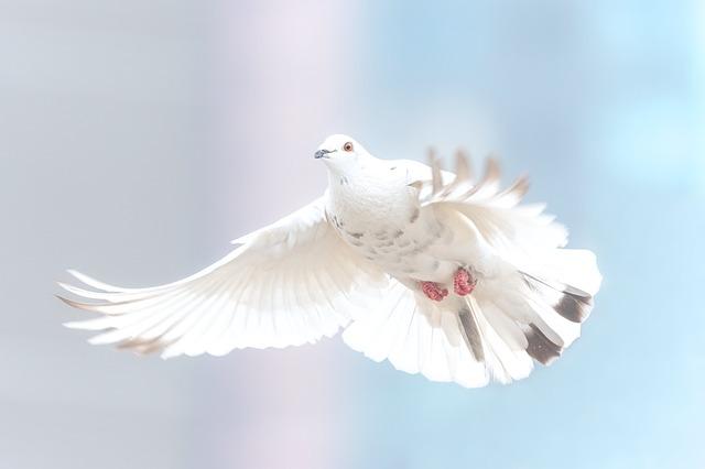 השלום מתחיל בבית – וזו לא פוליטיקה